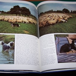 Elseviers Hondenboek - Wendy Boorer