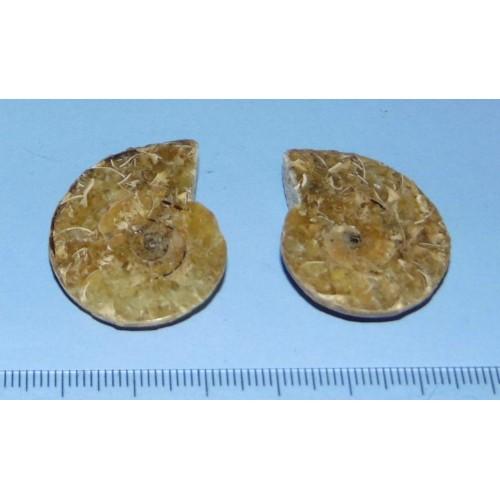 Ammoniet fossiel paar PE - 32x26mm