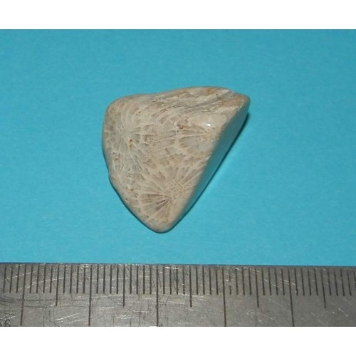 Fossiel Honingraat Koraal - steen K