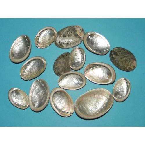 12 Abalone schelpen - 30-35mm