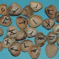 Runen schelpen